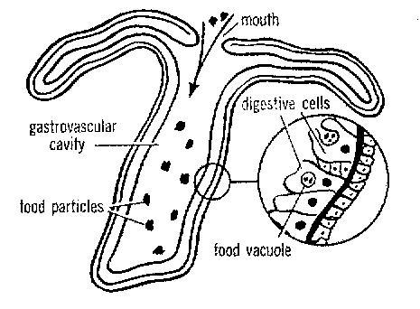 45prc30147n besides 928d2 2005 as well Anatomy likewise Ch8 2nutrition likewise Troy Bilt Pony Wiring Diagram Model 13wx79kt011. on grasshopper parts breakdown